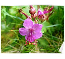 Sticky Geranium (available in ipod, iphone, & ipad cases) Poster