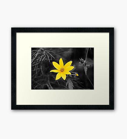 Chokeweed SC Framed Print