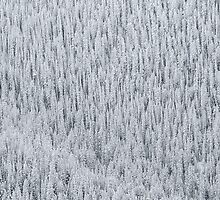Snowy Trees Aspen, CO by Toby Harriman