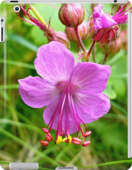 Sticky Geranium (available in ipod, iphone, & ipad cases) by Jess Meacham