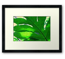 Leaf and sky Framed Print