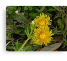 Dandelions Waking Up Canvas Print