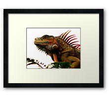 Green Iguana, Cozumel Framed Print