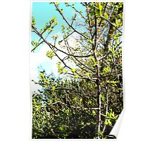Japanese Pear Tree in the Sun Poster