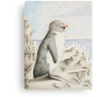 Rockhopper Penguin Canvas Print
