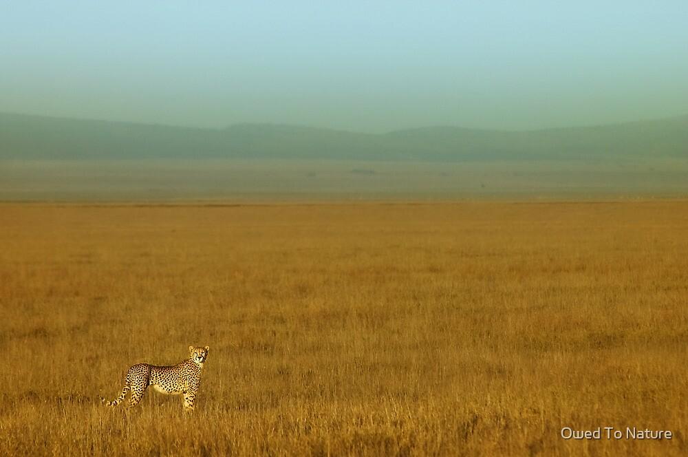 Duma plains by Owed To Nature