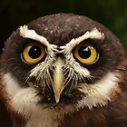 Spectacled Owl by Steve Green