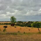 Great Ottway National Park, Vic by kenea