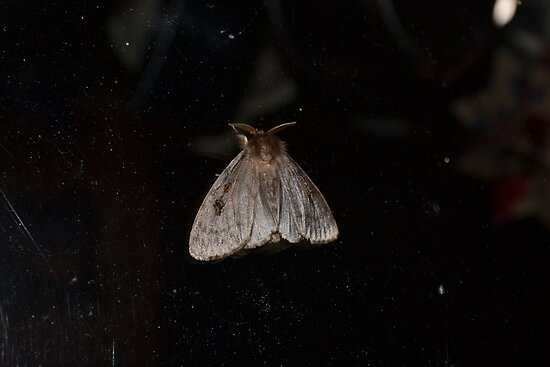 Moth by Paul Halley