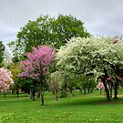 Windy, Cold, Overcast (...But Beautiful) Spring Day by Gene Walls