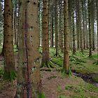 Kielder Forest by Sarah Horsman