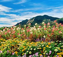 Flowers and Flatirons by Greg Summers