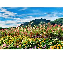 Flowers and Flatirons Photographic Print