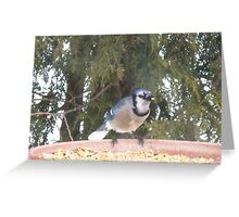 Blue Jays...strike one! Greeting Card
