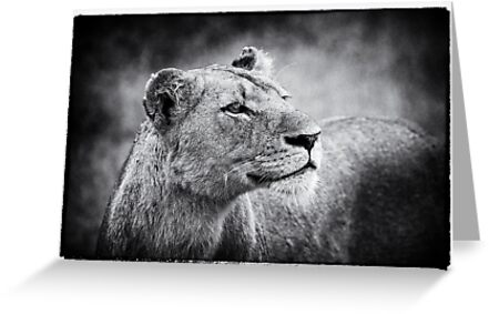 Lioness In Wait by Michael  Moss
