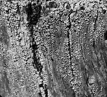 Fingerprints #4 by AmishElectricCo