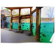 Hippo Harbor at STL Zoo Poster