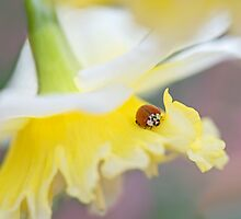 Daffy Lady  by SynappedPhoto