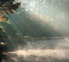 Mist on Daylesford Lake by pbclarke