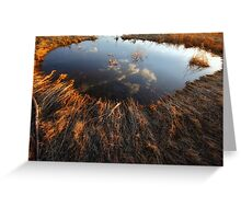 Upon A Pond Greeting Card