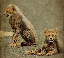 A HAPPY EASTER from the cheetah cups! by Magaret Meintjes