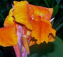 Orange Canna Lily Blossom by ♥⊱ B. Randi Bailey