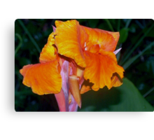 Orange Canna Lily Blossom Canvas Print