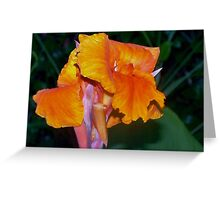 Orange Canna Lily Blossom Greeting Card