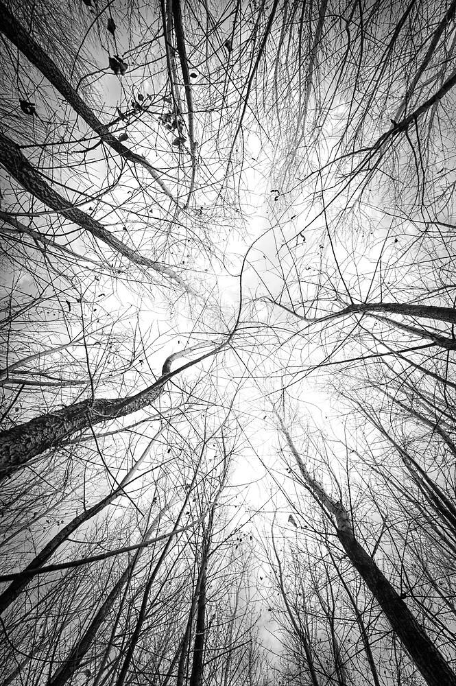 Tangle by Bob Larson