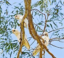 Three in a Tree  by Pene Stevens