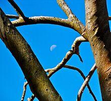 Moon Branches by Matthew Eakin