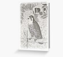 Peregrine Falcon on Fence Greeting Card