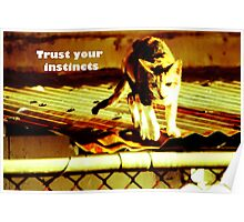 Trust your instincts w/ qoute Poster