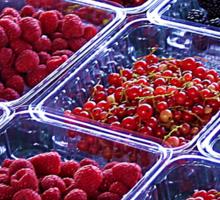 Summer Berries Sticker