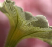 Natures Lattice  by Joy Watson