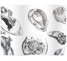 Sketches - Sea Shells Poster