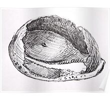 Sketches - Sea Shell Poster