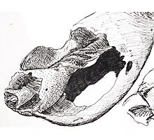 Sketches - Sea Shell Photographic Print