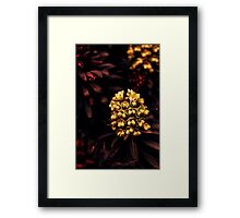 Nature's Jewels Framed Print