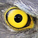 View in the eye of a goshawk pupil by Kym Bradley
