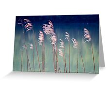 Ferns on Water -- Bavaria Greeting Card