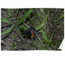 Dark Blue and Orange Butterfly Poster