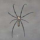 Spider by David Clarke