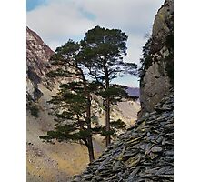 Pine and stone Photographic Print