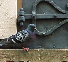 Pigeon on Perch -- Salzburg by PeachPark