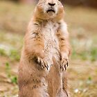 Prairie dog by Norma Cornes