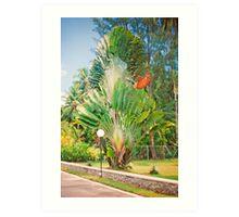 Seychelles splendour Art Print