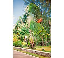 Seychelles splendour Photographic Print