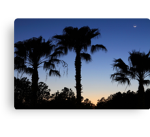 Florida Palms with Crescent Moon Canvas Print