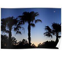 Florida Palms with Crescent Moon Poster